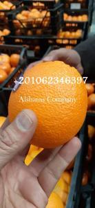 البرتقال الطازج