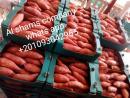 البطاطا الحلوه